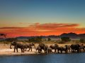 Herd of elephants in african savanna