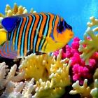 fish_17.jpg