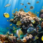 fish_21.jpg