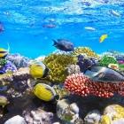 fish_43.jpg
