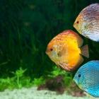fish_49.jpg
