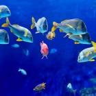fish_50.jpg