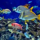 fish_51.jpg