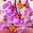 flora_104