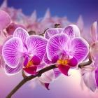 flora_105