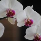 flora_108