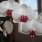 flora_109
