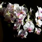 flora_113
