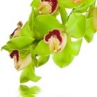 flora_120