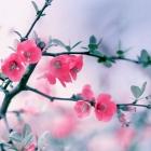 flora_177
