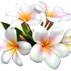 flora_180