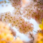 flora_183