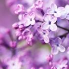 flora_190