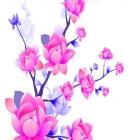 flora_91.jpg
