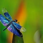 fly_15