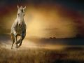 horse_11.jpg