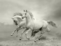 horse_12.jpg