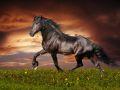 horse_13.jpg