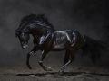 horse_16.jpg