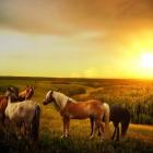 horse_21