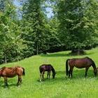 horse_24