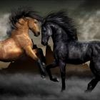 horse_32